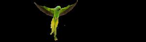 папагал александър