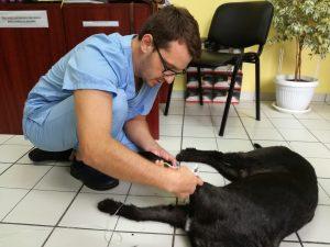 система,абокат,куче,добър лекар,лекар хирург