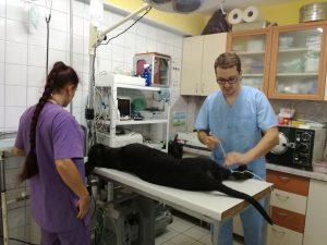 операция на куче,ветеринарен хирург