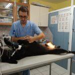 Ветеринарен лекар,добър ветеринарен лекар,ветеринарен хирург