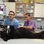 Ветеринарен лекар,ветеринарна клиника