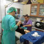кастрация,хирург,Ветеринарен лекар