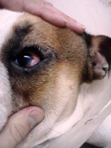 очен хирург
