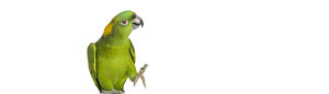 amazona parrots