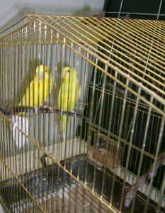Хотел папагал,хотел за птици