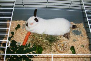 хотел за животни хотел заек