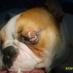 очна операция