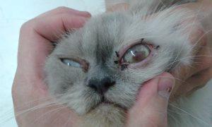 рана на окото,добър офталмолог