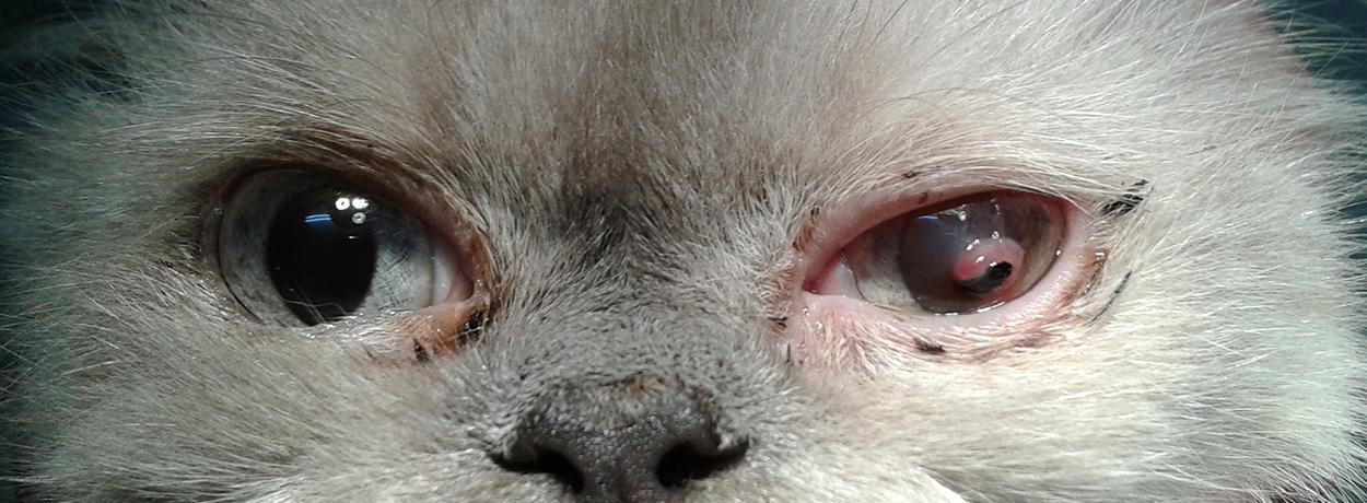 кератит,чуждо тяло в окото
