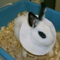 болен заек