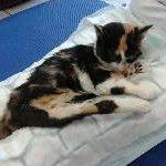 парализирана котка