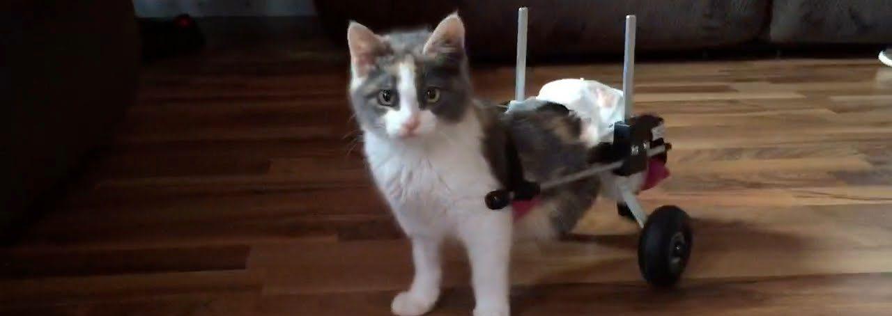 саката котка