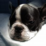 Куче с треска в окото