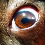 чуждо тяло в окото