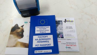 Международен паспорт на куче