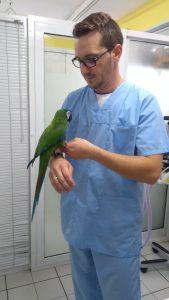 папагал ара, ветеринарен лекар, ветеринарен хирург, ветеринарен офталмолог, ветеринарен дерматолог,