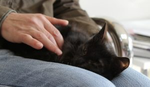 очна операция котка