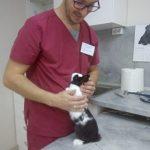 ветеринар гризачи, лекар зайци, добър лекар, ветеринарна клиника , ветеринарен лекар