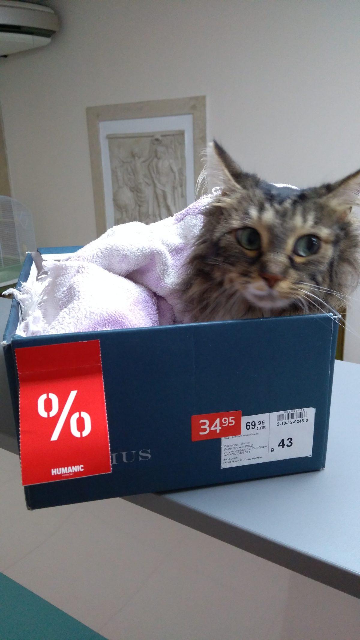 Котка на промоция