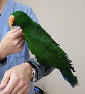 Еклектус, Таралеж, ветеринарен лекар, ветеринарен хирург, ветеринарен офталмолог, ветеринарен дерматолог,