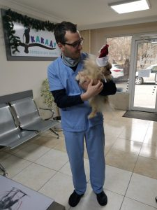 Коледно настроение, ветеринарен лекар, ветеринарен хирург, ветеринарен офталмолог, ветеринарен дерматолог,